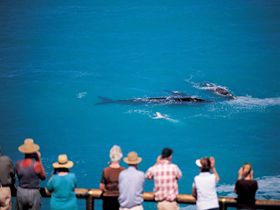 Whale Watching At Head Of Bight - Tourism Bookings WA