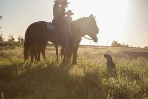 Balonne Cutting Horse Futurity - Tourism Bookings WA